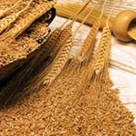 İthal Buğday