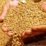 Kırık Buğday